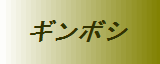 GSP血統 オオクワガタ(加藤隆行氏)